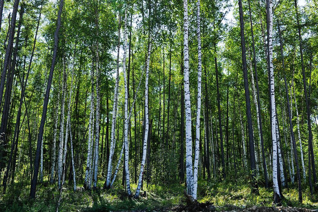 送香炉      产地:大兴安岭原始森林区       食品级合成软木